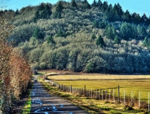 Running in Corvallis: Three Great Fall Routes